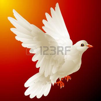 8202459-white-dove