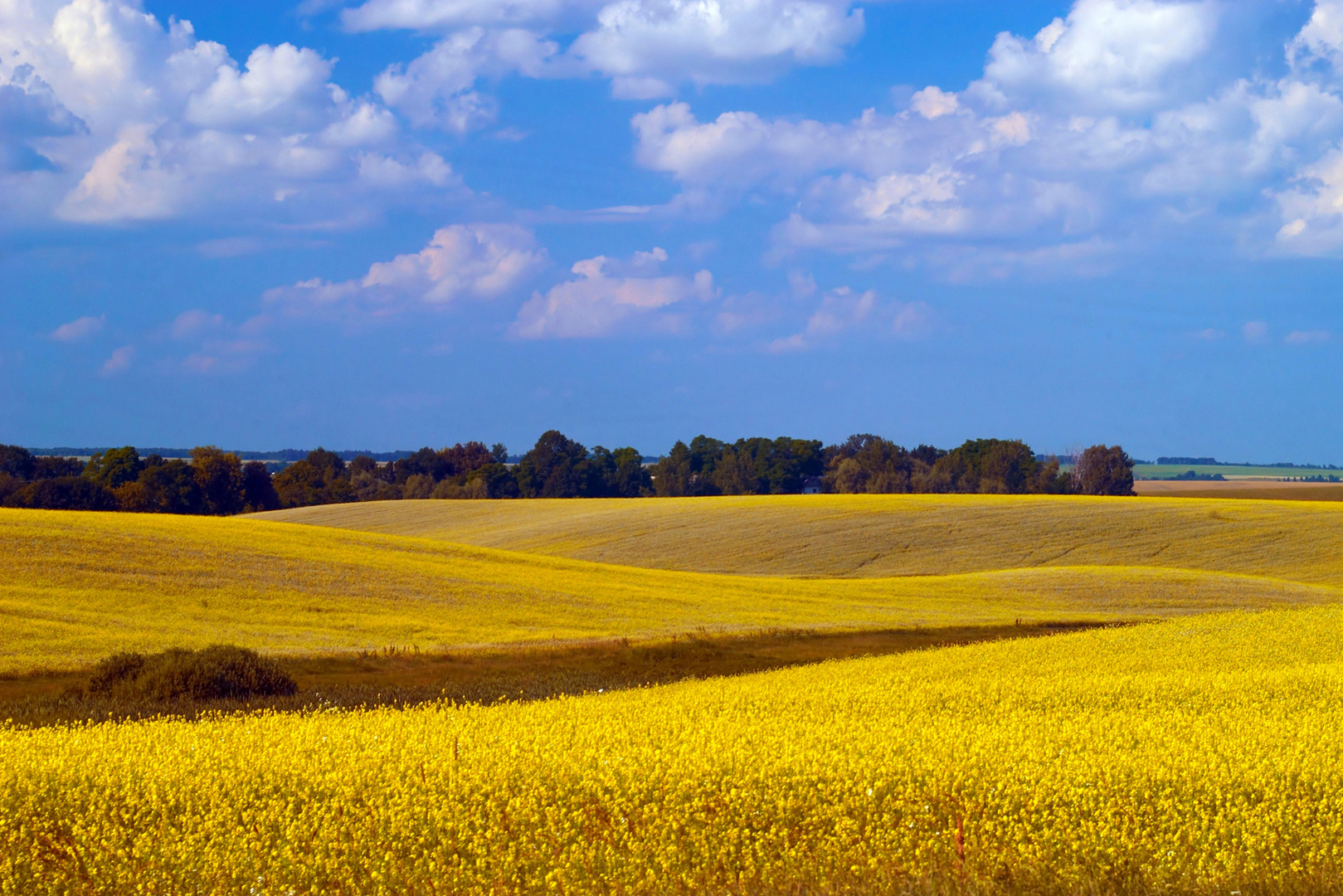 A landscape of yellow field and blue sky